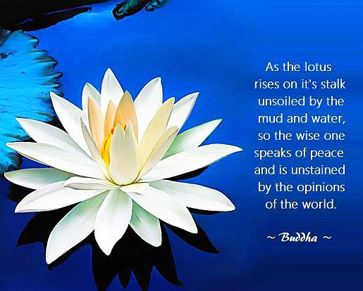 Buddha Quotes_Wallpapers_Images_Photos_Pictures